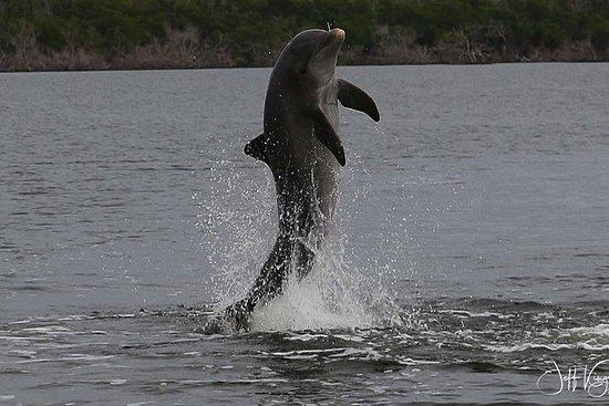 Zweistündige Delfin-, Vogel- und...