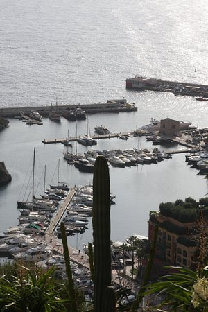 The harbor behind the cactus