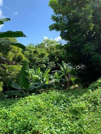 Jungle views on the hike