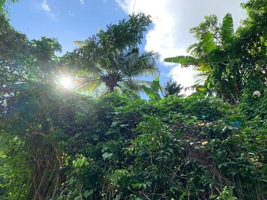 Bim's Jamaican Jungle Adventure Hike