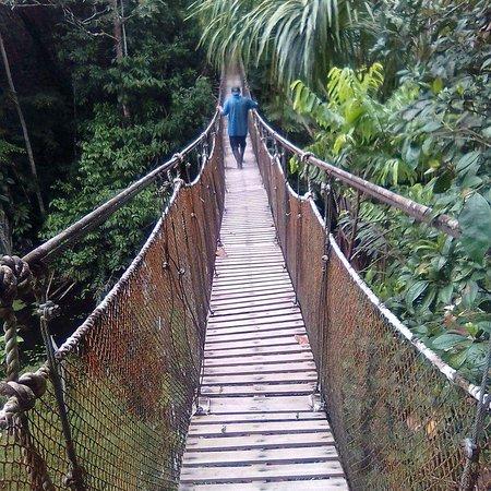Iquitos, Peru: Tour por el río Amazonas  tenemos diferentes programas de tour muy variados como. Observación delfines  rosados gris, pesca de piraña, caminata dentro la selva para observar árboles gigantes y conocer plantas medicinales ,buscar monos como perezoso, caminata nocturna para buscar caimán ,tarántula. Serpiente, canotajes, , visitas a pueblos nativos de la selva, visita al centro rescates para ver muchas especies de monos como perezoso , mono choro. Guacamayo ,tucán. Anaconda,
