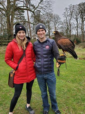 Κίλκεννι, Ιρλανδία: What a magnificent raptor!