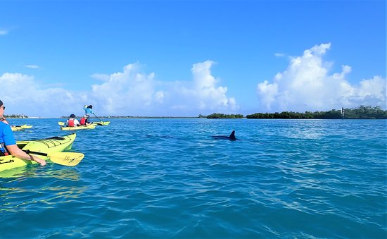 Kayak Eco Tour: We were privileged to get a glimpse of Jo Jo the resident dolphin