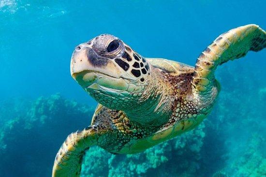 Zwemmen met de schildpadden