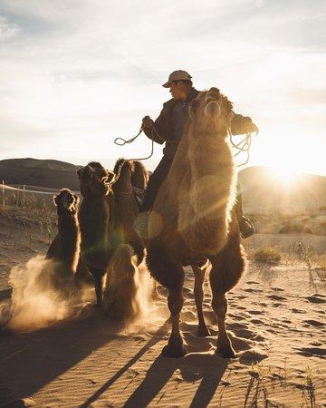 Пустыня Гоби: Многоликая пустыня - просмотрите отзывы.