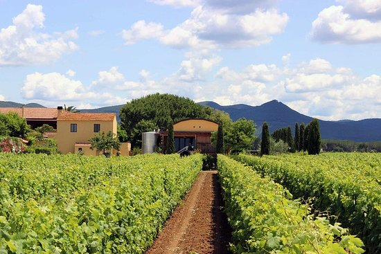 Bolgheri: Vingårdstur med vinsmagning...