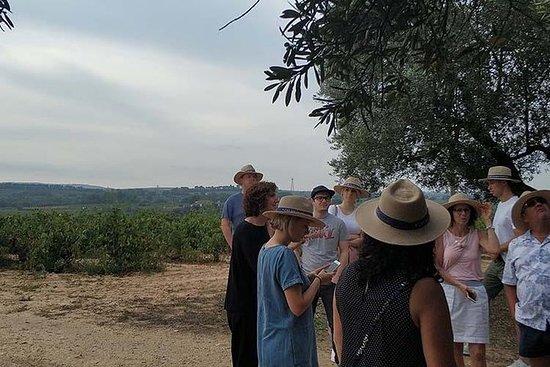 Excursión privada de vinos y cava en...