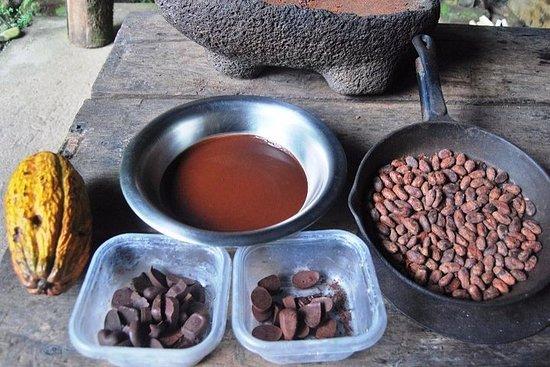 L'expérience de la forêt de chocolat...
