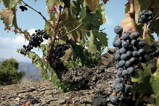 WINE TOUR PRIORAT: Visite las 2...
