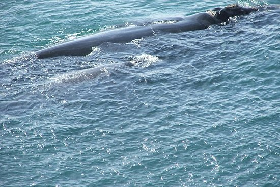 Private Shore Whale Watching Tour to Walker Bay Hermanus from Cape...