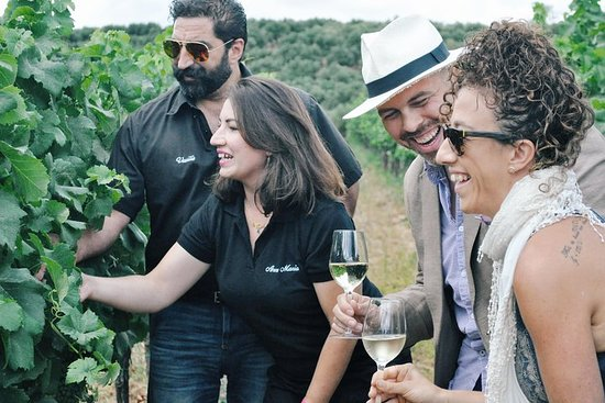 Wine Discovery- Visit 2 Wineries on this Half Day Group Tour