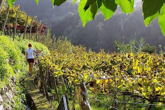 Full-daagse Madeira wijnproeverij met ...