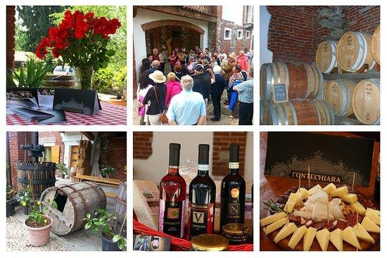 Visita y degustación de 4 vinos DOC...