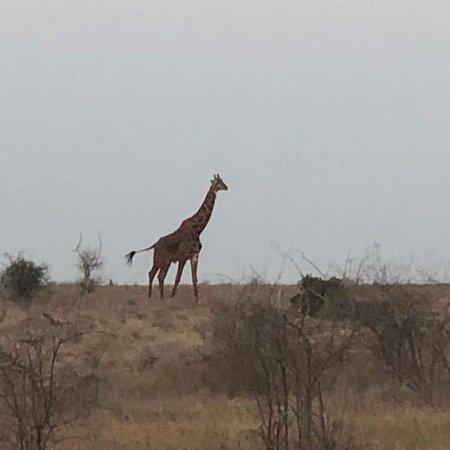 Tsavo National Park East, Kenia: Siamo un agenzia safari, escursioni e trasferimenti in kenya personale italiano per qualsiasi info info@vivereilkenya.com www.vivereilkenya.com