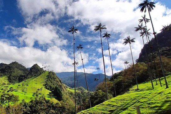 Excursion En El Valle Del Cocora