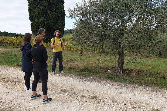 Excursión de senderismo a Settignano...