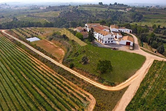Фотография Viticulture and Wine-Tasting 3-Hour Trip from Barcelona