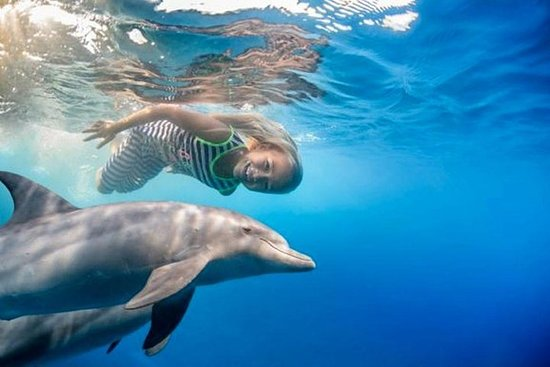 Dolphin House Snorkeling Sea Trip...