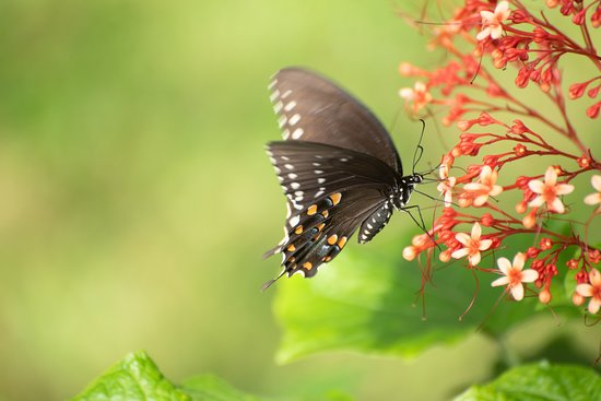 Beautiful flowers attract colorful butterflies, moths, honeybees and hummingbirds on the Amrit Yoga campus.
