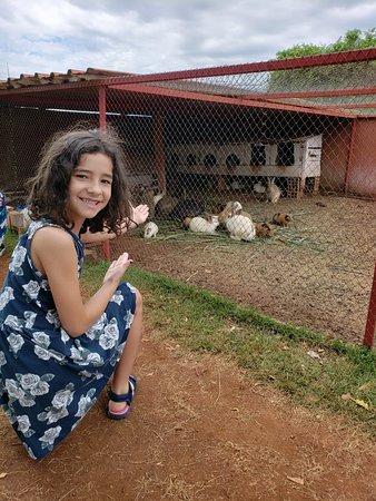 Juranda Paraná fonte: media-cdn.tripadvisor.com