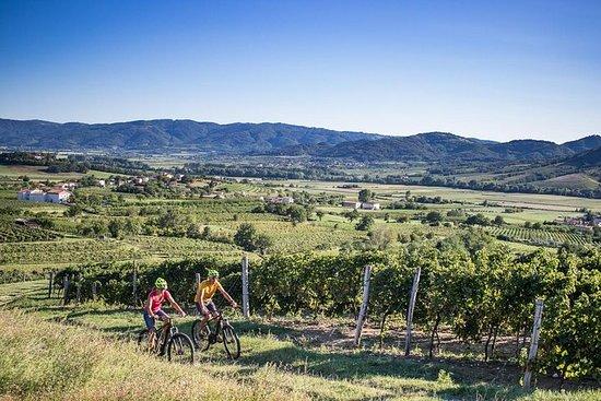 Secret vineyards E-bike tour
