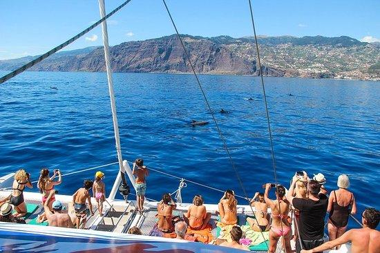Delfin- und Walbeobachtungs-Bootstour...