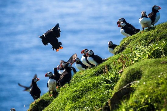 Private Westman Islands dagstur