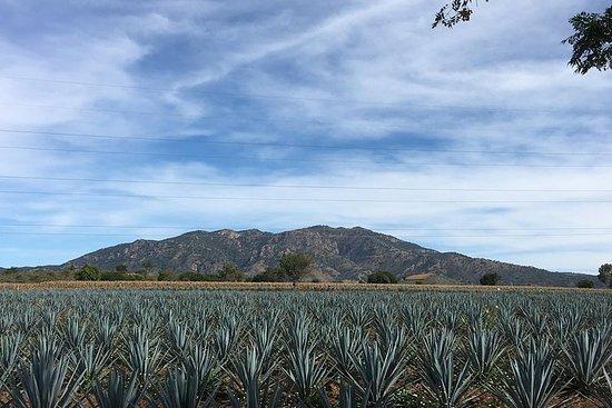 Tequila-opplevelse i kommersiell versjon