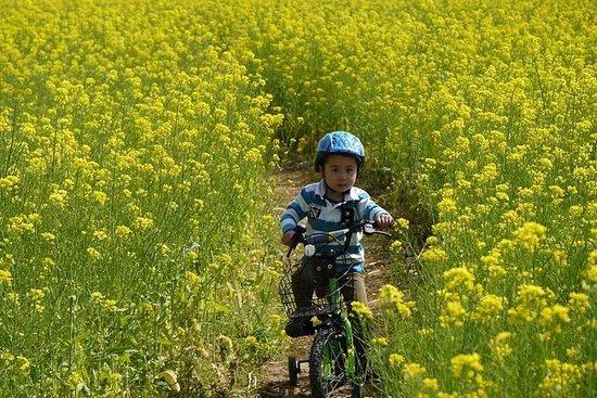 ニホンザル、小布施町、りんご園を観光して回る、長野日帰りサイクリングツアー