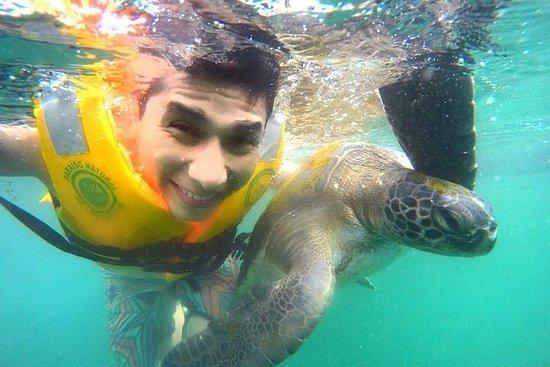 Recorrido por playas y nado con tortugas 4 días y 3 noches.