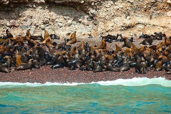 Excursão de 2 horas às Ilhas Ballestas