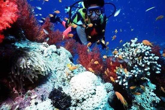 Marin- och konsttur i Mombasa - Dykning, snorkling, skidåkning-bild