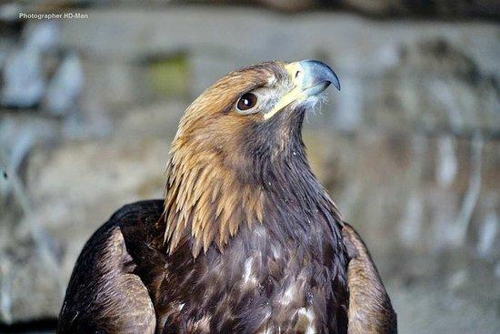 Festival de l'aigle royal et tour de chasse