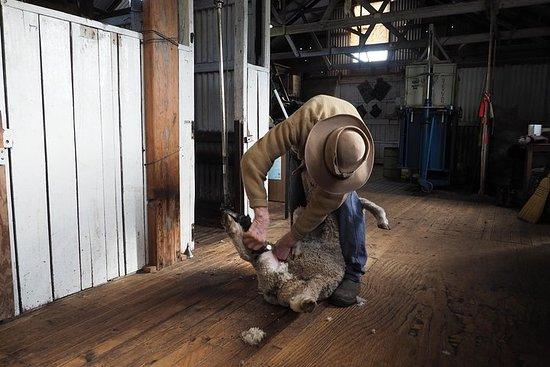 Sovereign Hill Heritage Sheep Farm Experience and Ballarat Gold Rush...