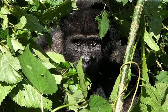12 Day Affordable Safari-Gorilla and...