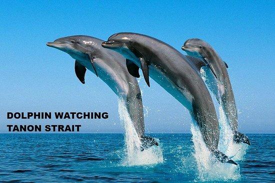 Manjuyod Sandbar & Dolphin Watching Joiner Tour via Campuyo Pier