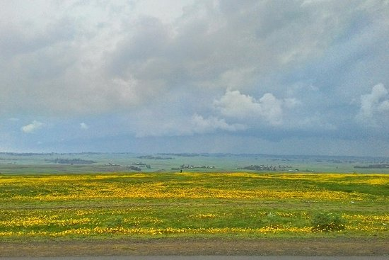 Esplora i laghi della Rift Valley etiopica e il sito UNESCO di Steles