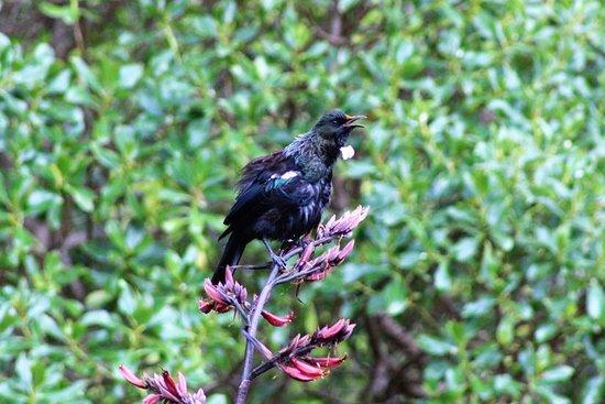 Kapiti Island Eco dagstur til det fantastiske naturreservat på Kapiti...