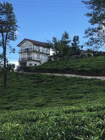 Tealeaf Retreat