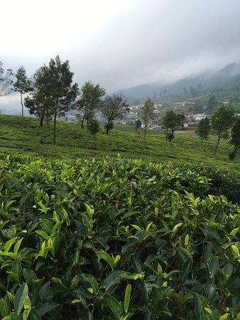 Perfect tea plantation retreat!