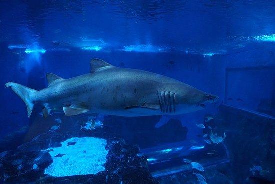 Entrada al acuario de Sevilla.