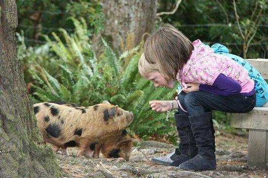 Skip the Line: Staglands Wildlife Reserve Entry Ticket