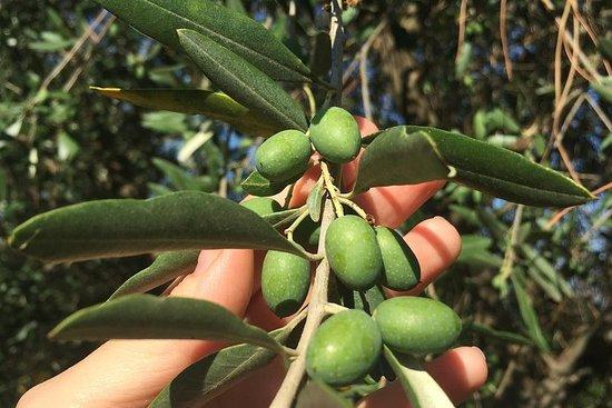 特級初榨橄欖油旅遊與品嚐