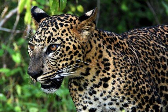 Visite privée: Parc national YALA...