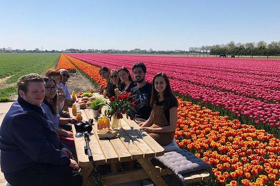 Visite des tulipes et des moulins à...