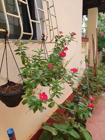 Foto de Fatima Guest House, Calangute: Double bed Standard AC room - Tripadvisor