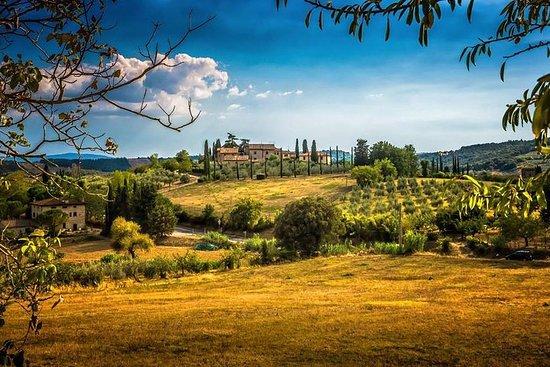 Carmignano Halbtagestour ab Florenz: Der erste Cabernet-Sauvignon in...