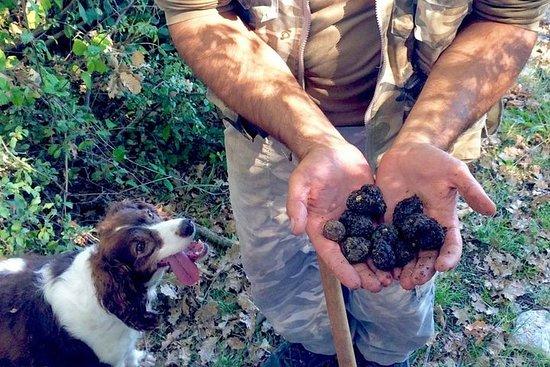 Abruzzo caça às trufas e refeição de...