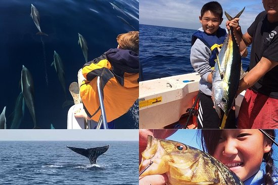 Whale Watching and Fishing Combination Excursions