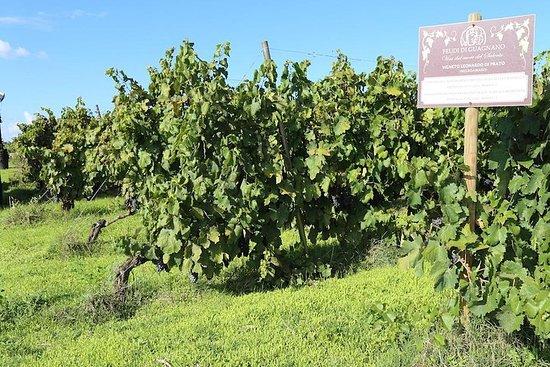 Welcome To Salento! Wine tasting at Feudi di Guagnano